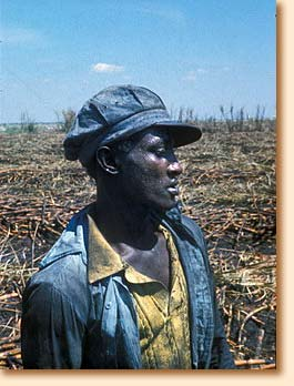 Sugar cane worker in Florida